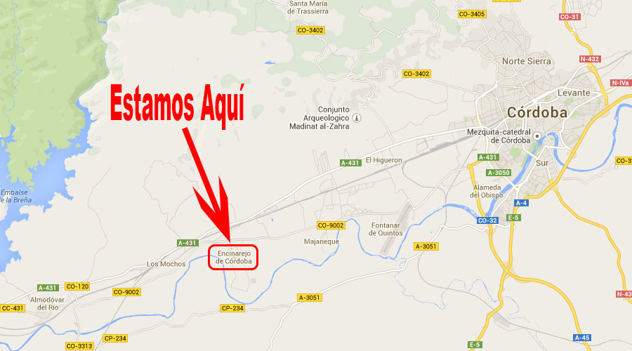 Viveros de Olivos San Eloy - Encinarejo (Córdoba)